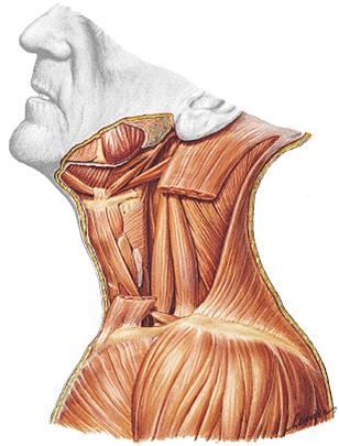 Los dolores con izquierdo al lado del cuello y el hombro