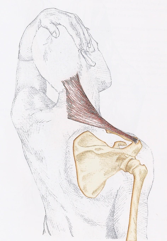 El dolor en los riñones da en el pie izquierdo