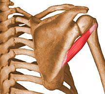 Donde pegar pertsovyy el emplasto a la osteocondrosis