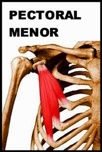 La elongacion es lo que cuenta - 1 part 6