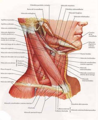 Dolor en el cuello lado izquierdo frontal